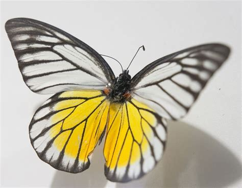 Hanoi museum displays collection of rare butterflies