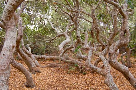 Elfin Forest Natural Area - Wikipedia