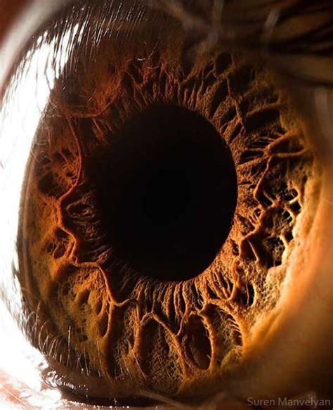 Human Eye Under a Microscope (21 photos) | KLYKER