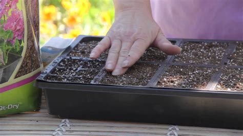 How Deep to Plant Marigold Seeds : Grow Guru - YouTube