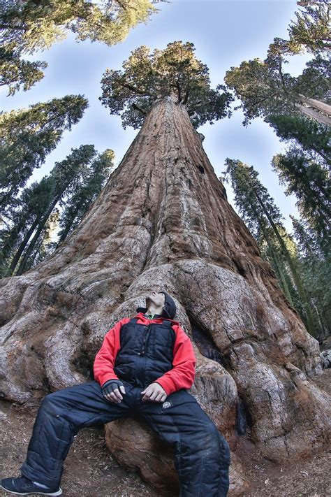 Sequoia National Forest, Tulare County, California - #