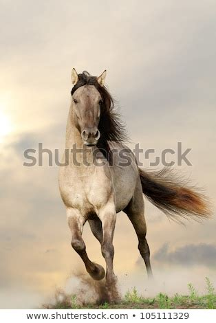 Horses Running Stock Photos, Images, & Pictures   Shutterstock