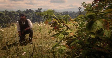 Red Dead Redemption 2 Herbalism Challenge 3 guide: Every