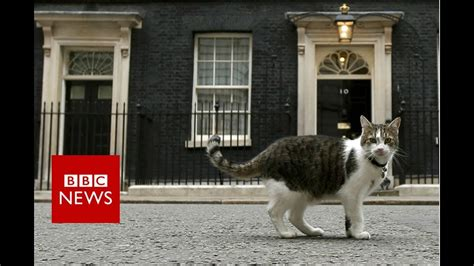 Downing Street cat gets a helping hand - BBC News - YouTube