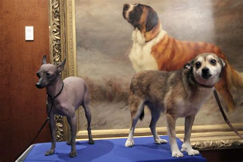 6 new breeds debut at Westminster dog show, but history
