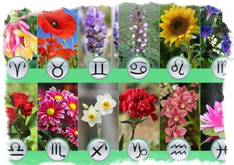 What Flower Sign are you According to the Zodiac