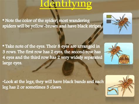 Top 5 Most dangerous spider in the world